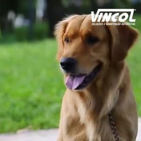 Você sabe como transportar o seu Pet corretamente?